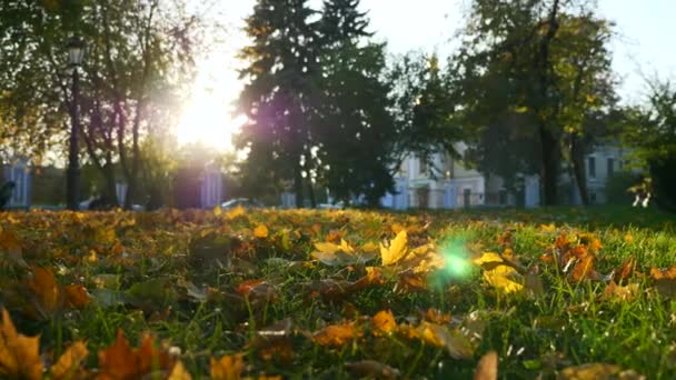 Slow Motion Falling Yellow Leaves. Lens Flare Beautiful Evening Sunshine Autumn Season Golden Hour In City Park 60 fps