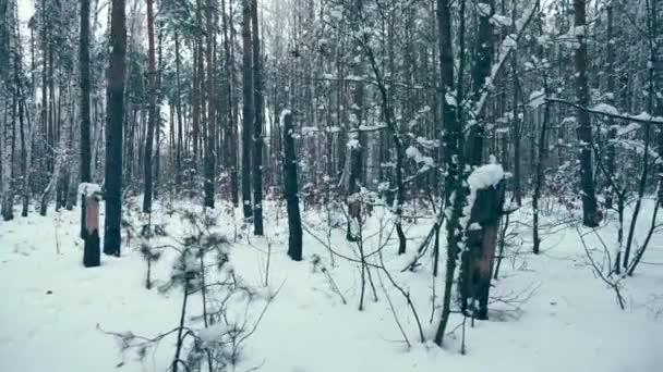 Abendlicher Winterwald. schneebedeckte Bäume dämmern. Eiskaltes Wetter. Dämmerung im Wald