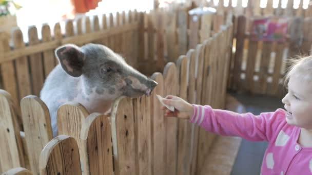 Malý dva rok stará dívka krmí malé prasátko v kontaktní zoo a farmy