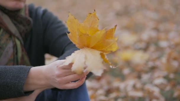 Frau sitzt im Park auf dem gelben Laub und hält die Blätter des Ahorns in den Händen