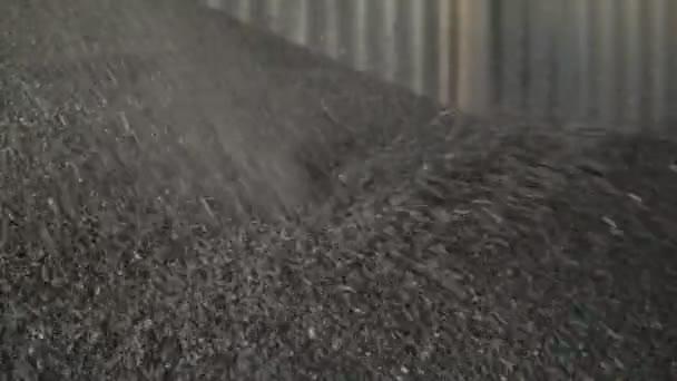 Combine harvester unloaded sunflower in grain storage. Combine harvester unloaded sunflower in grain storage. Sunflower Seed Barn