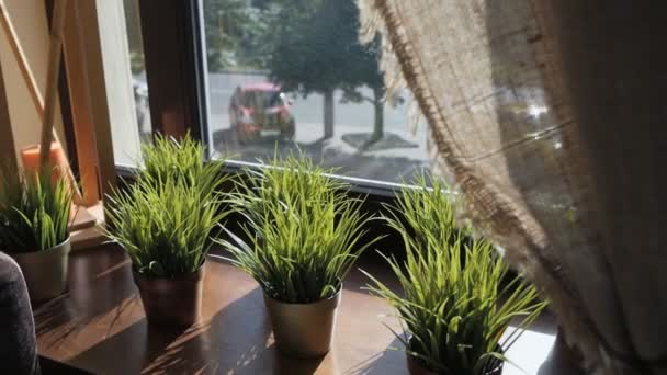 Az ablakpárkányon három csésze fényes zöld fű.
