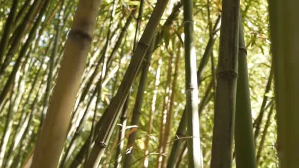 Stems of bamboo growing in a bamboo grove.