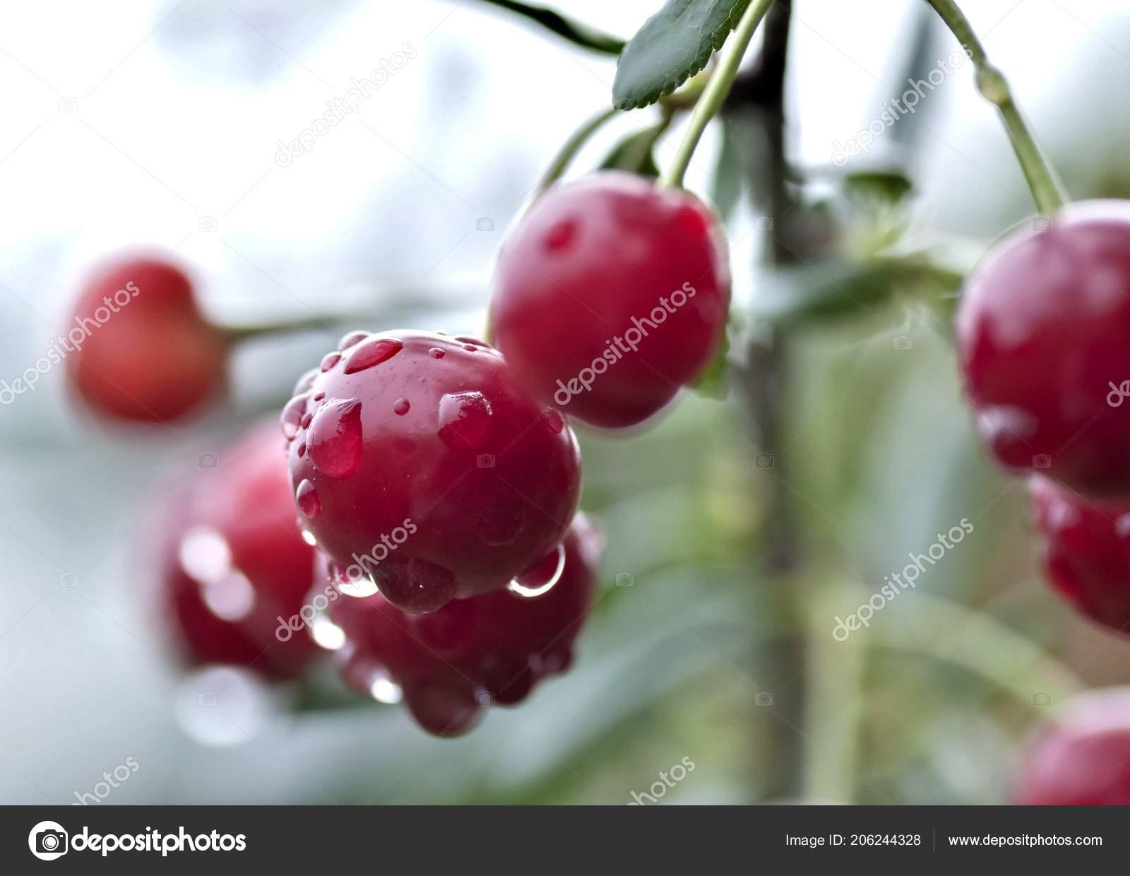 Cherry Rain Nude Photos 39