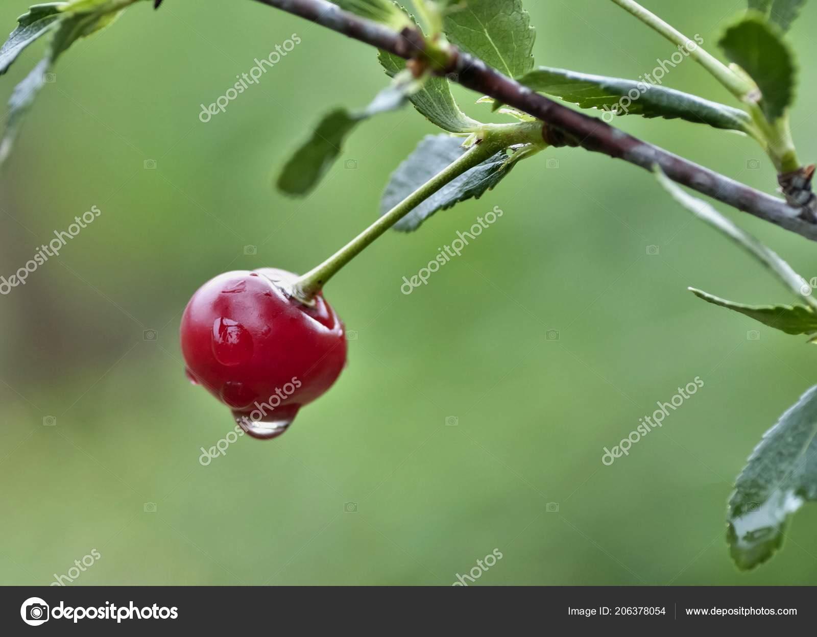 Cherry Rain Nude Photos 89
