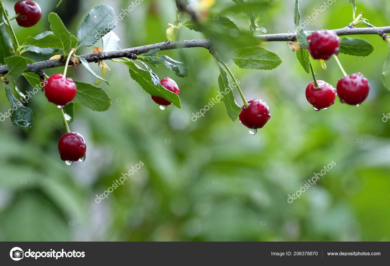 Cherry Rain Nude Photos 76
