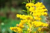 Fotografie yellow flowers blossom