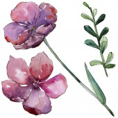 Fotografie Pink flax. Floral botanical flower. Wild spring leaf wildflower isolated.
