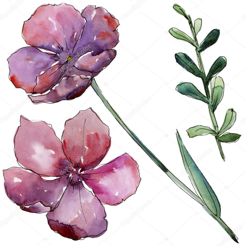 Pink flax. Floral botanical flower. Wild spring leaf wildflower isolated.