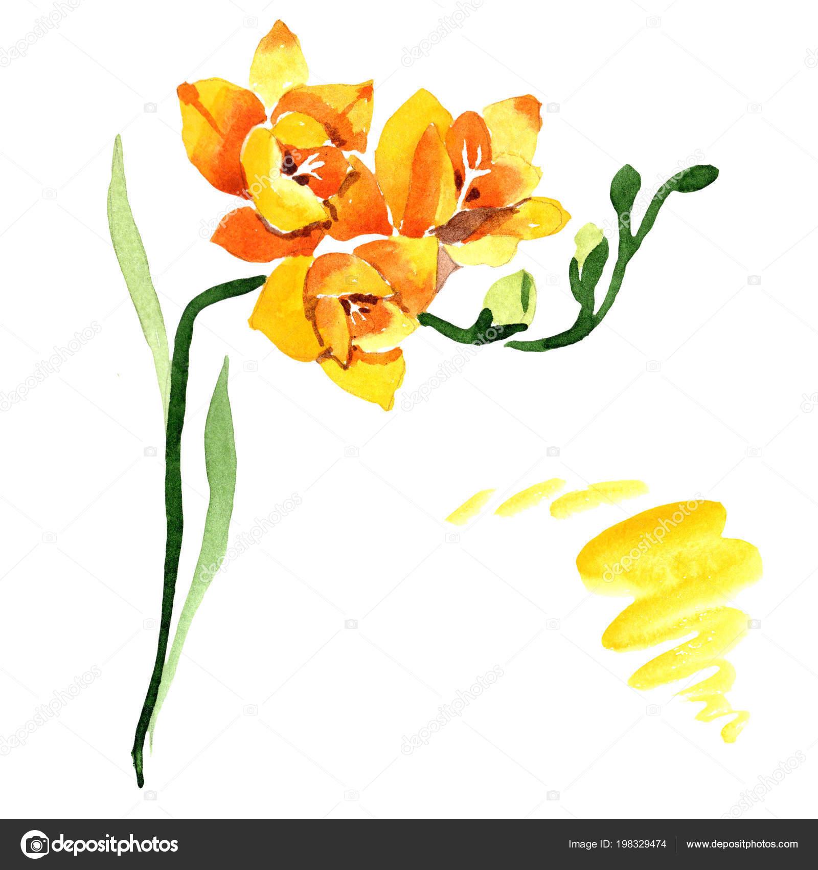 Yellow Freesia Floral Botanical Flower Wild Spring Leaf Wildflower