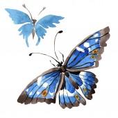 Fotografie Vzácné motýly divoký hmyz ve stylu akvarelu, samostatný. Aquarelle divoký hmyz pro pozadí, textura, souhrnný vzorek nebo tetování