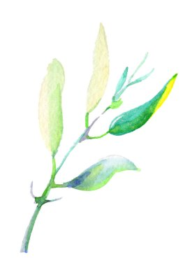 Olive branches in a watercolor style isolated. Full name of the plant: Branches of an olive tree. Aquarelle olive tree for background, texture, wrapper pattern, frame or border.