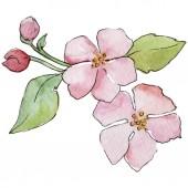 Fényképek Cseresznye rózsaszín virágok. Virágos botanikai virág. Vad tavaszi levél vadvirág elszigetelt