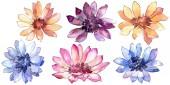 Színes Dieffenbachia. Virágos botanikai virág. Elszigetelt ábra elemet. A háttér textúra, burkoló minta, keret vagy határ Aquarelle vadvirág