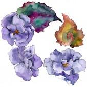 Virág lila gardania. Virágos botanikai virág. Elszigetelt ábra elem