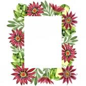 Piros gazania virág. Virágos botanikai virág. Test határ Dísz tér. A háttér textúra, burkoló minta, keret vagy határ Aquarelle vadvirág.
