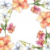 Oranžové a bílé amaryllis. Květinové botanické květin. Frame hranice ozdoba náměstí. Aquarelle wildflower pro pozadí, textura, souhrnný vzorek, rám nebo hranice