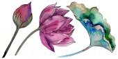 Rózsaszín lótuszvirág. Virágos botanikai virág. Elszigetelt ábra elemet. A háttér textúra, burkoló minta, keret vagy határ Aquarelle vadvirág