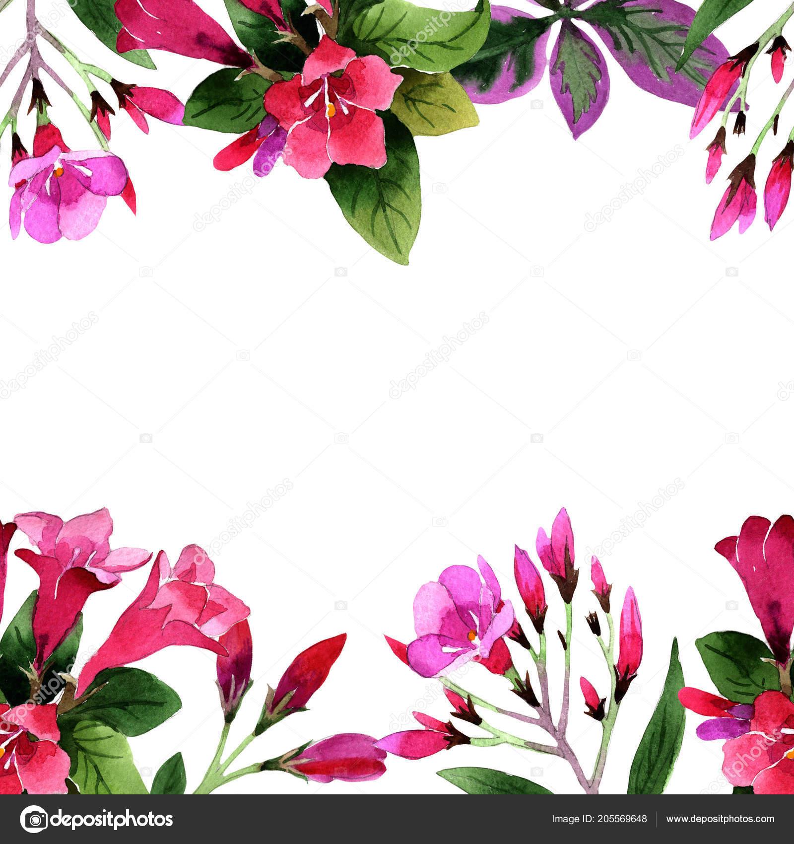 Watercolor Pink Weigela Florida Flowers Floral Botanical Flower