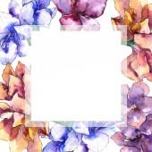 Fotografie Aquarell lila Amaryllis Blume. Frame Border Ornament Quadrat