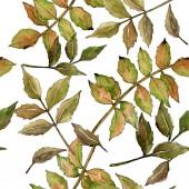 Fotografia Cenere verde foglie. Fogliame floreale foglia pianta giardino botanico. Reticolo senza giunte della priorità bassa