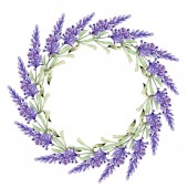 Watercolor purple lavender flowers. Floral botanical flower. Frame border ornament square. Aquarelle wildflower for background, texture, wrapper pattern, frame or border.