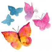 Fotografia Insetto selvaggio di farfalle esotiche in stile acquerello isolato. Nome completo dellinsetto: farfalle. Insetto selvatico Aquarelle per sfondo, texture, pattern wrapper o tatuaggio