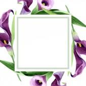 Aquarell violette Callas Blume. Blütenbotanische Blume. Rahmen Rand Ornament Quadrat.