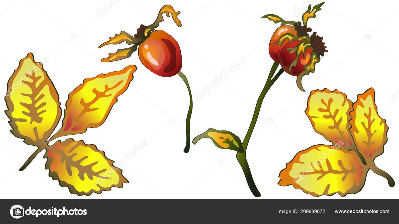 Vector Automne Feuilles Jaune Rose Musquee Plantes Feuillage Floral