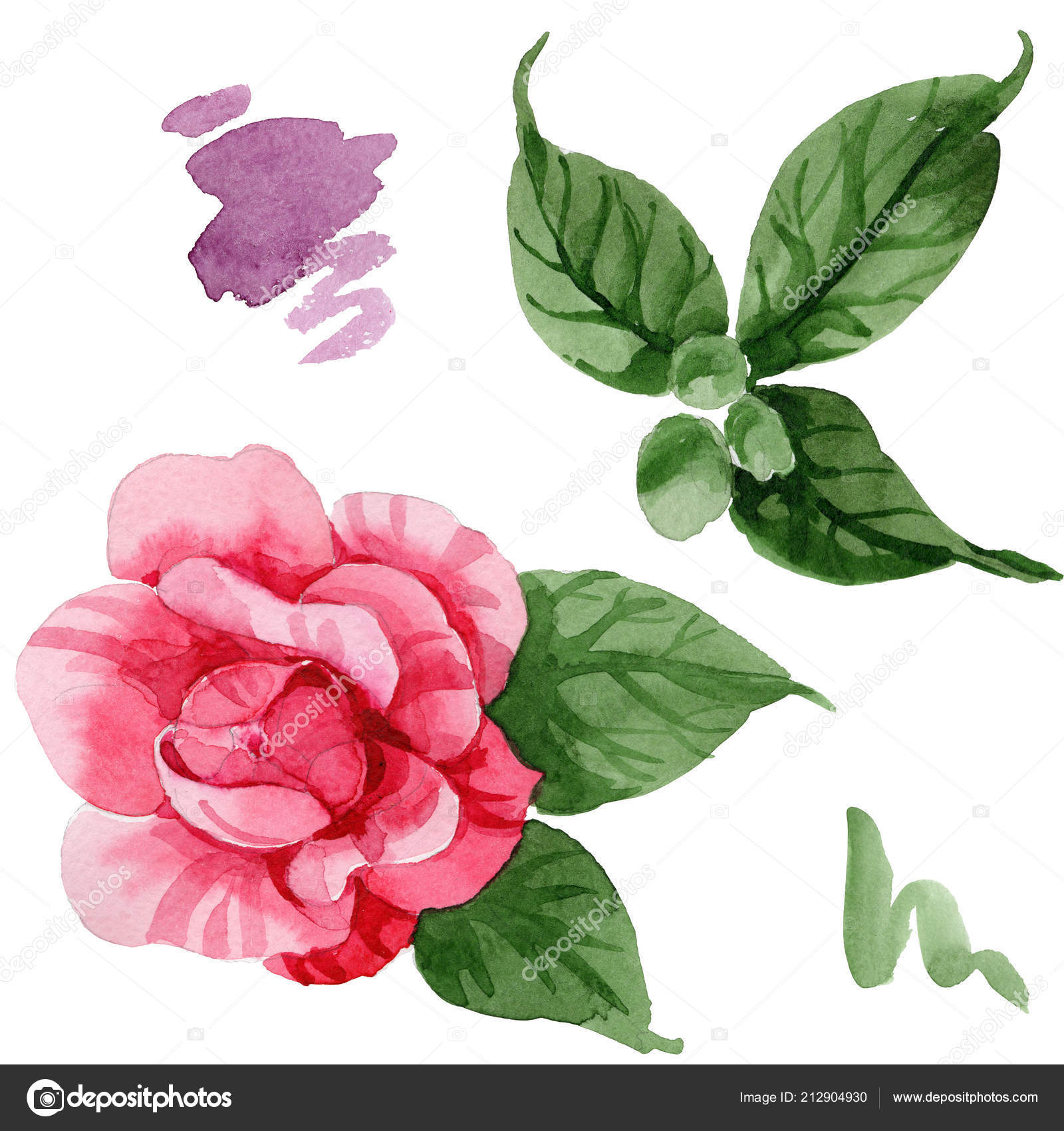 Watercolor Pink Camellia Climbing Flower Floral Botanical Flower