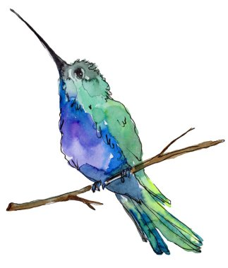 Sky bird blue colibri in a wildlife by watercolor style isolated. Wild freedom, bird with a flying wings. Aquarelle bird for background, texture, pattern, frame, border or tattoo.