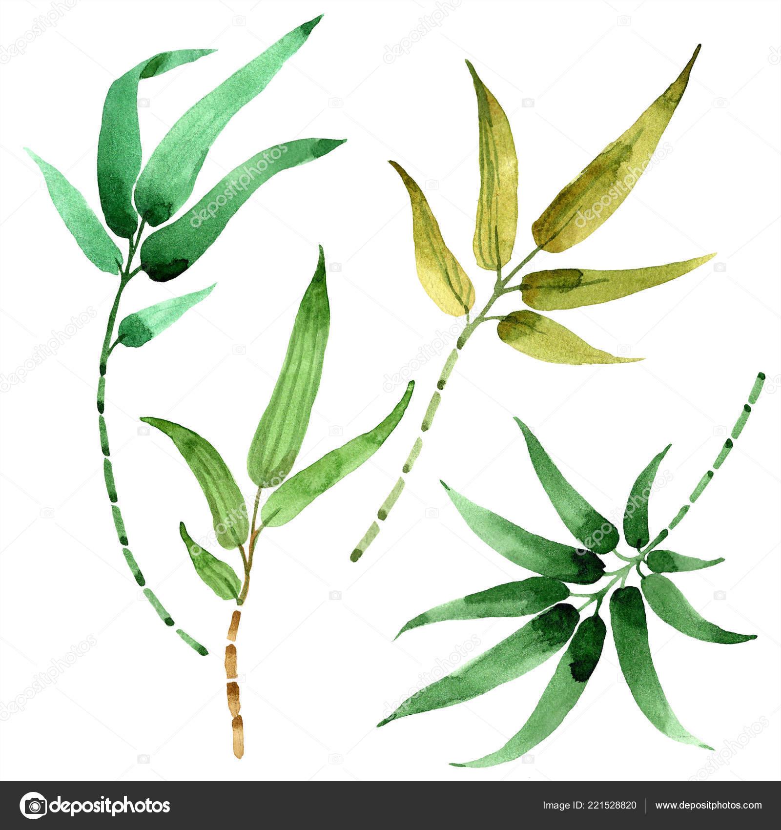 Foglia Di Bamb.Foglia Di Bambu Verde Fogliame Floreale Foglia Pianta