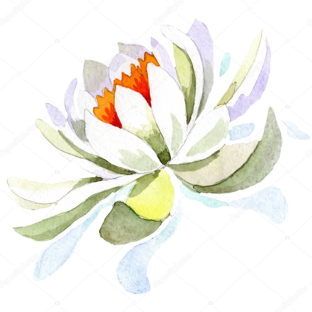Watercolor white lotus flower. Floral botanical flower. Isolated illustration element.
