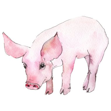 Pig animal in a watercolor style isolated. Aquarelle wild animal for background, texture, wrapper pattern or tattoo.