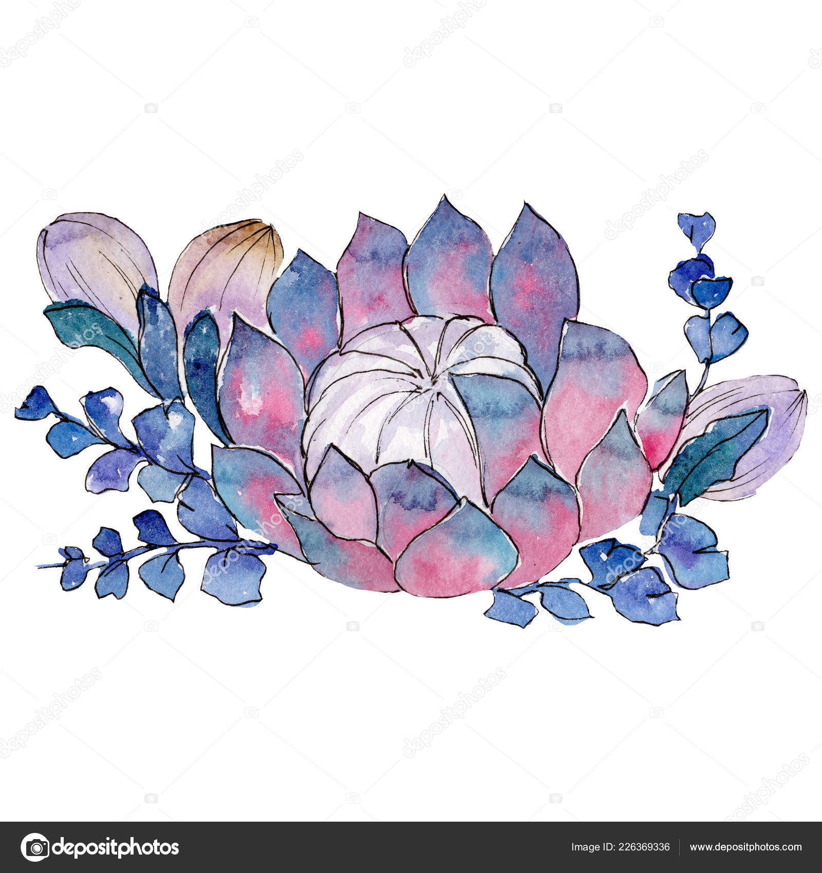 Succulent Bouquet Isolated Succulent Illustration Background Element Watercolour Drawing Aquarelle Bouquet Stock Photo Image By C Mystocks 226369336