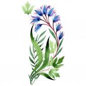 Kék virágos botanikai virágok. Akvarell háttér illusztráció készlet. Elszigetelt dísz ábra elem.