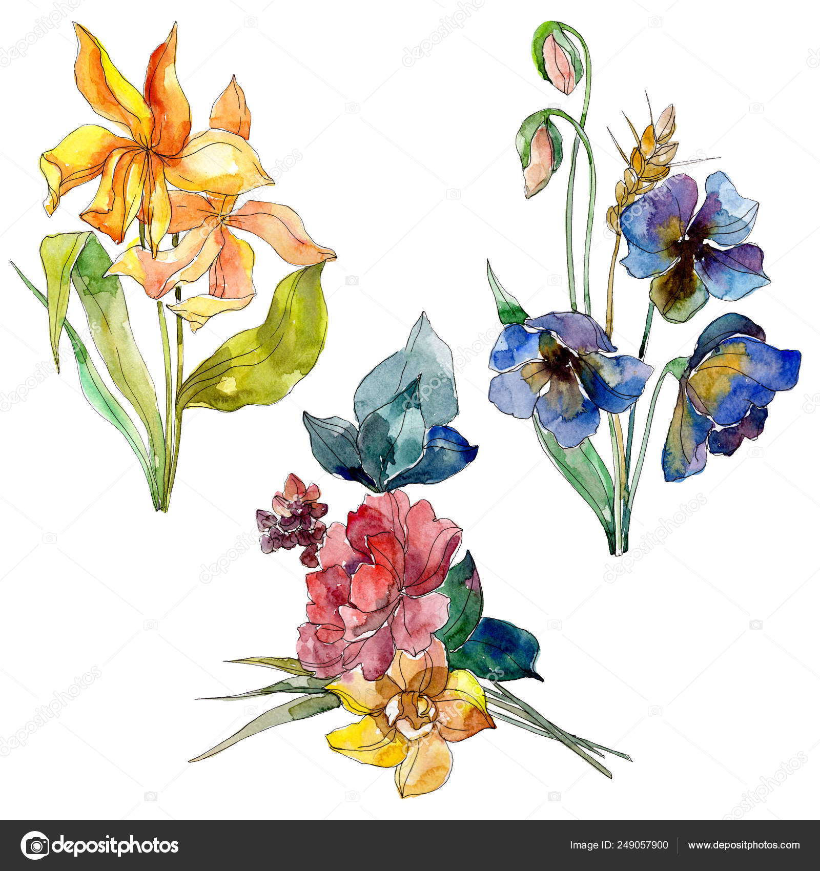 Wildflower Bouquet Floral Botanical Flowers Watercolor Background Set Isolated Wildflower Illustration Element Stock Photo Image By C Mystocks 249057900