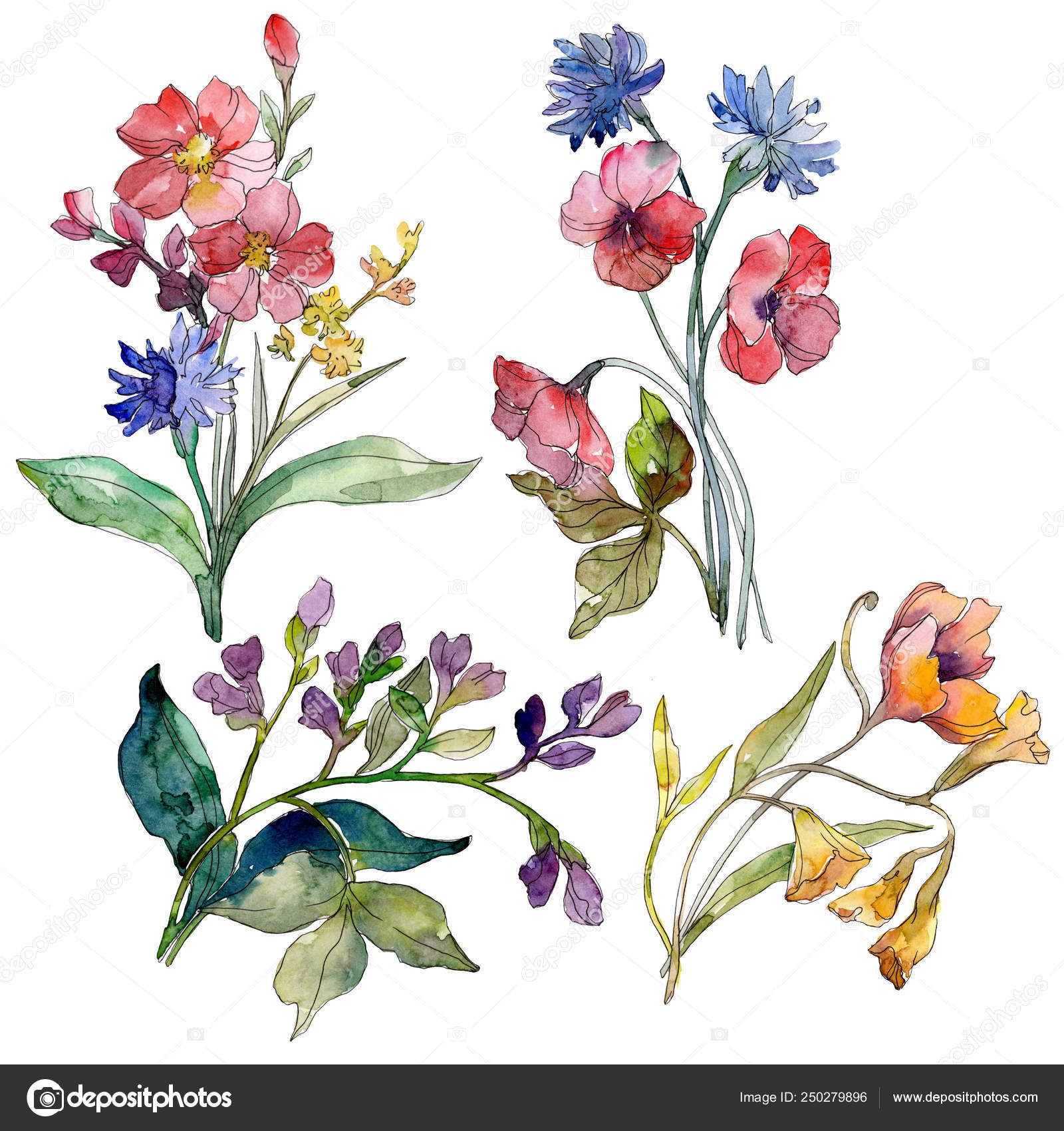 Wildflower Bouquet Floral Botanical Flowers Wild Spring Leaf Wildflower Watercolor Stock Photo Image By C Mystocks 250279896