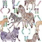 Exotické zebra divoké zvíře ve stylu akvarelu. Sada akvarel pozadí obrázku. Vzor bezešvé pozadí.