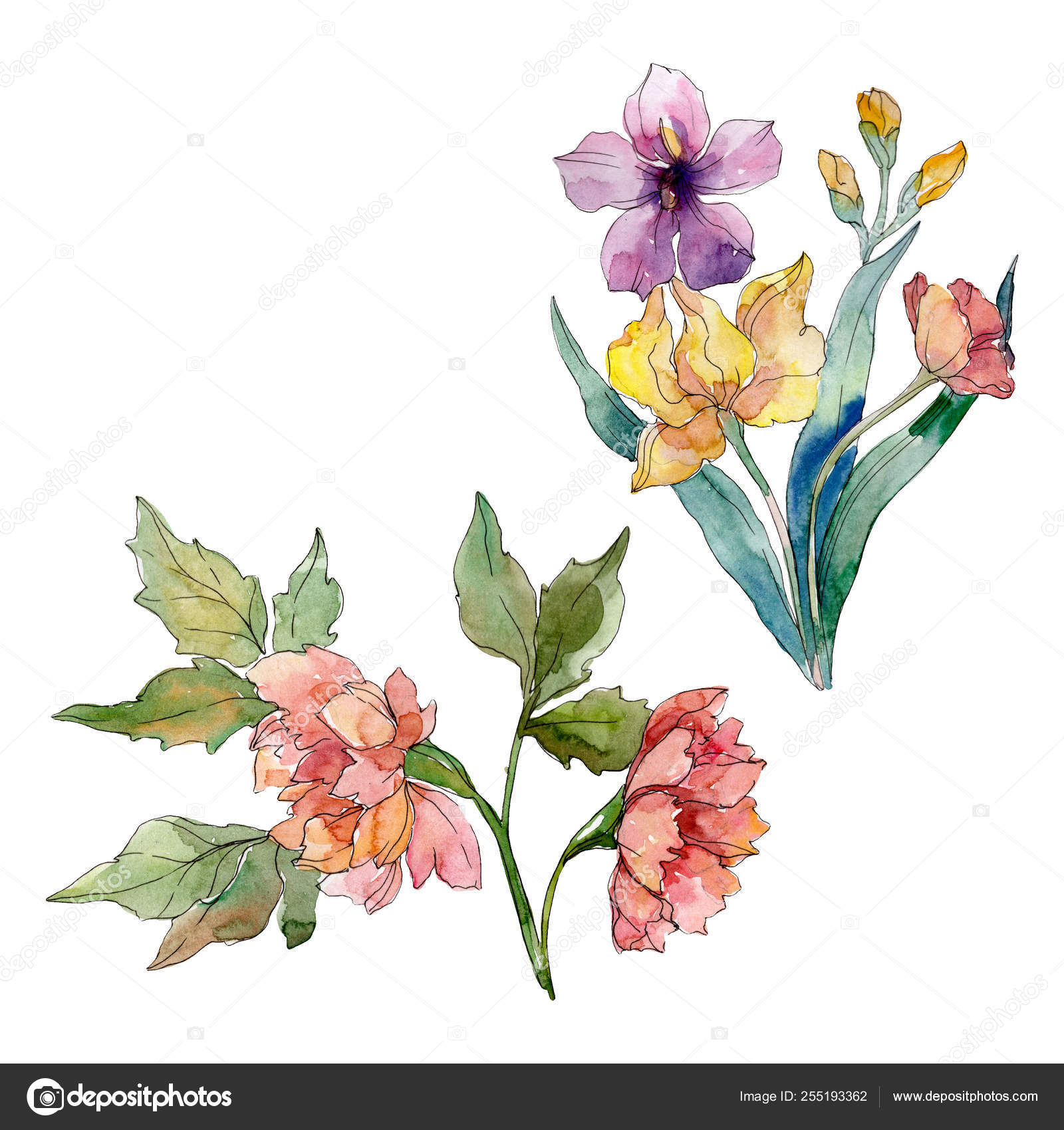 Wildflower Bouquet Floral Botanical Flowers Watercolor Background Set Isolated Wildflowers Illustration Element Stock Photo Image By C Mystocks 255193362