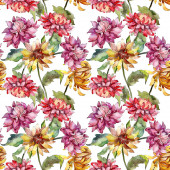 Mishaelmas daisy floral botanical flowers. Watercolor background illustration set. Seamless background pattern.