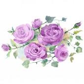 Lila rózsa csokor virágos botanikai virágok. Akvarell háttér készlet. Izolált csokrok illusztráció elem.