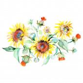 Napraforgó csokor virágos botanikai virágok. Akvarell háttér készlet. Izolált csokrok illusztráció elem.