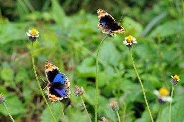 """Картина, постер, плакат, фотообои """"бабочки, бабочка, бабочка обои, бабочка бабочка бабочка,"""", артикул 257627228"""