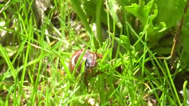 Kann auf dem Rasen im Garten Bug