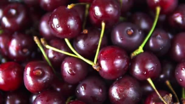 Close-up of red ripe cherry fruit