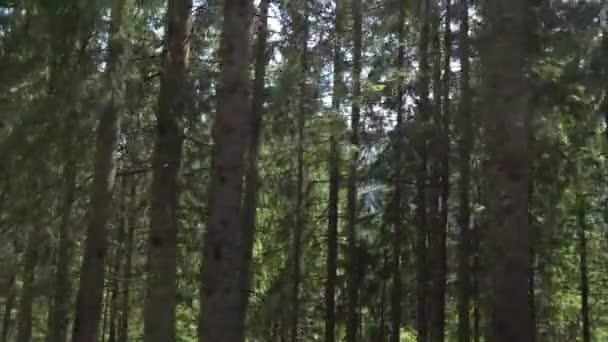 Blikající stromy podél horské silnice v Tatrách