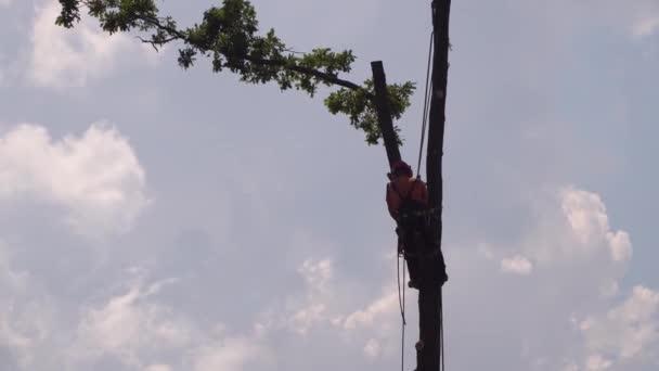 Faipari ágak vágása láncfűrésszel biztosítási magasságban
