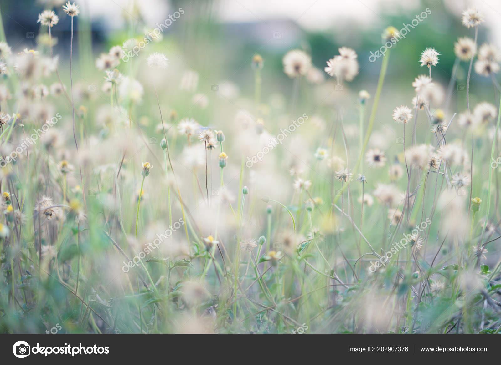 Nombreuses Fleurs Herbe Dans Jardin Vert Dans Matinée Sous ...
