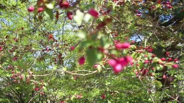 pramen růžového květu